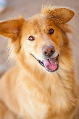 Adoptable Dog Taffy Pets Animals Adoption Rescue Dog Pets Dog Adoption Animal Rescue