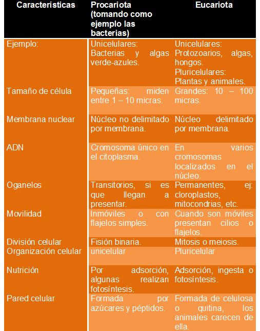 Cuadros Comparativos Diferencias Entre Celulas Procariotas Y