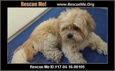 A New Animal Was Posted For Adoption On Rescue Me Click Here For