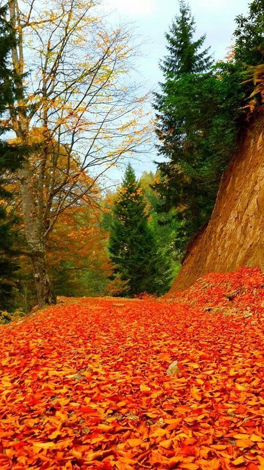 Giresun - Espiye Düğdür'de sonbahar…  Fotoğrafı gönderen: Sezai Parlak