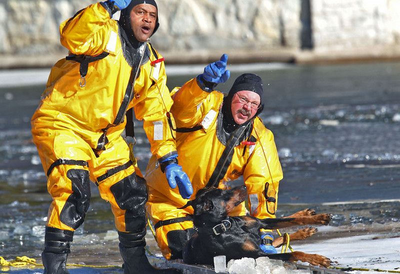 Description of . St. Louis firefighters Demetris Alfred, left, and Stan Baynes signal other firefighters on shore to pull them off the ice o...