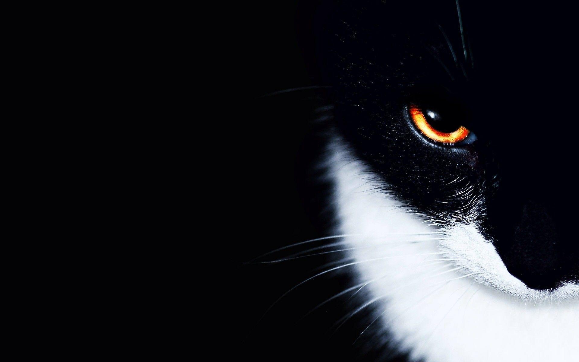 Epingle Par Nicolas Sur Nancy Fond D Ecran Chat Fond D Ecran Mignon Chat Animales