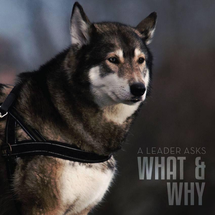 Idea by Credit Cards, NJ on Motivation Dogs, Pet dogs