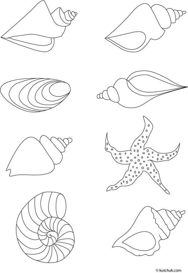 Coloriage coquillage - Coloriage de coquillage ...