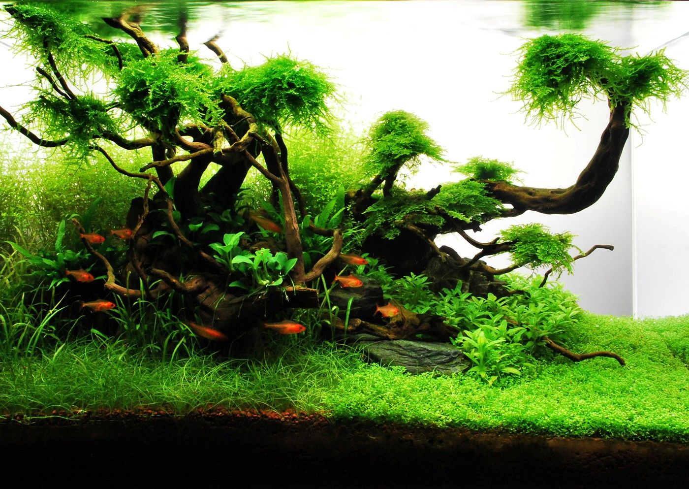 Aquascaping / planted tank (mit Bildern) | Planted ...