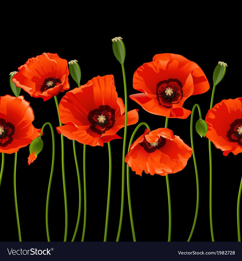 Red poppies in a row vector image on in 2020 Red poppy