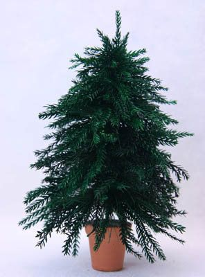 Make a Realistic Miniature Christmas Tree from Lycopodium Moss Make a realistic miniature Christmas tree for a dolls house, railroad scene, or Christmas village using a bottle brush tree and preserved lycopodium greenery. View Full-Size