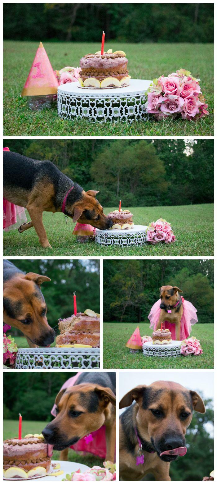Gabby Carr Photography Raleigh NC Puppy Cake Smash Pet Dog Birthday
