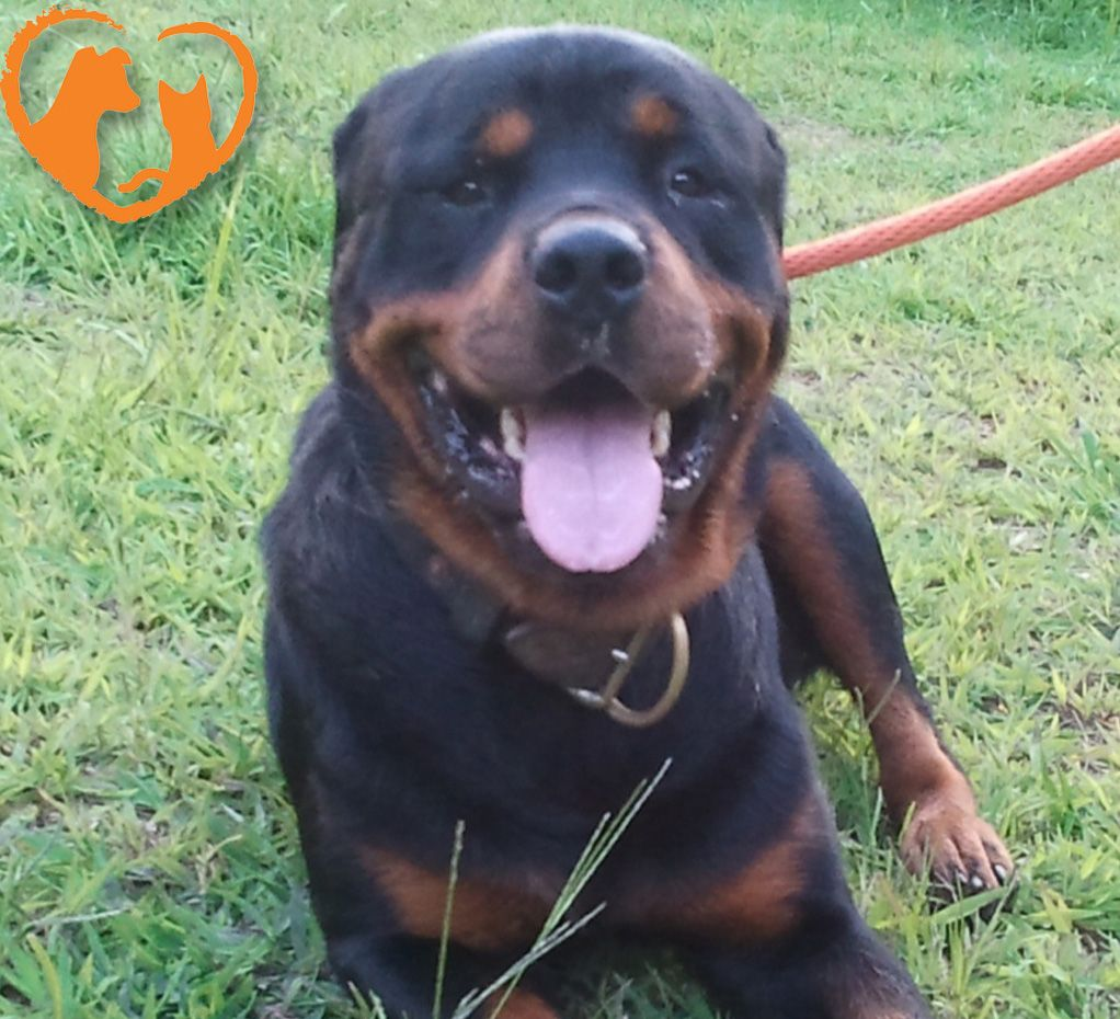 They Left Me Heartwarming Story Contest Rottweiler Rescue Pet Holiday Heartwarming Stories