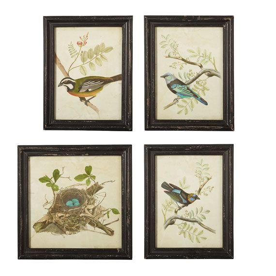 nesting birds framed prints set of four oka