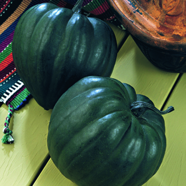 Acorn Squash 'Taybelle PM' -Plant Details - Natural Beauty Selects An excellent choice for small-space gardens. The compact, bushy plants require less space than other squash varieties without sacrificing yields. Acorn Squash are a breeze to prepare and each half is a perfect single-size serving! Last up to 2-3 months when stored in a cool, dark storage area. A good source of dietary fiber and potassium.