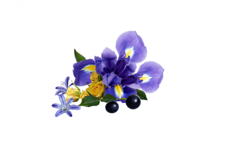 The Essential Oil Obtained From The Root Of The Iris Flower Orris Concrete Has Real Cosmetic Properties Let S Take A Iris Flowers Beauty Skin Care Skin Care