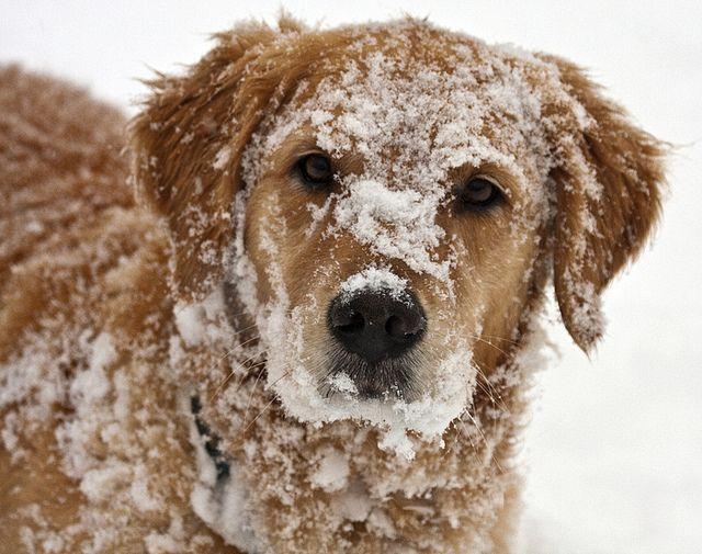 10 Dogs In Snow Snow Dogs Dogs Dog Love