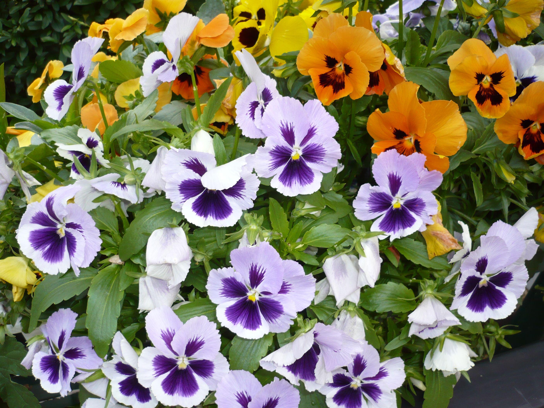Pin Van Heinz Siepmann Op Blumen Garten