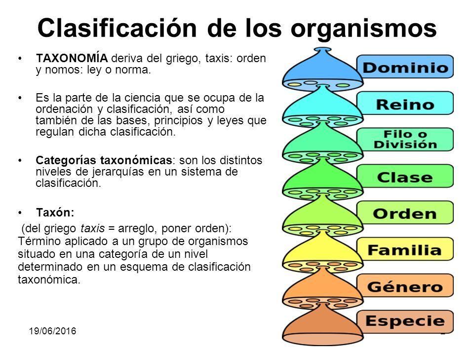Clasificación De Los Organismos Biology Back To School Life