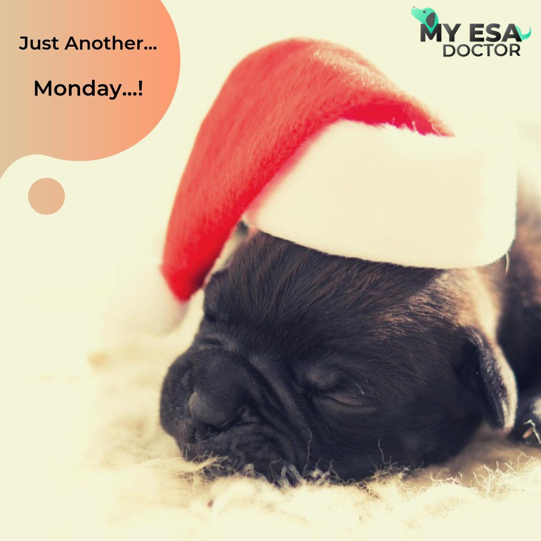Get ESA Letter Online Emotional Support Animal My ESA
