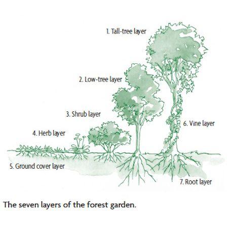 How to Design a Backyard Forest Garden Organic Gardening