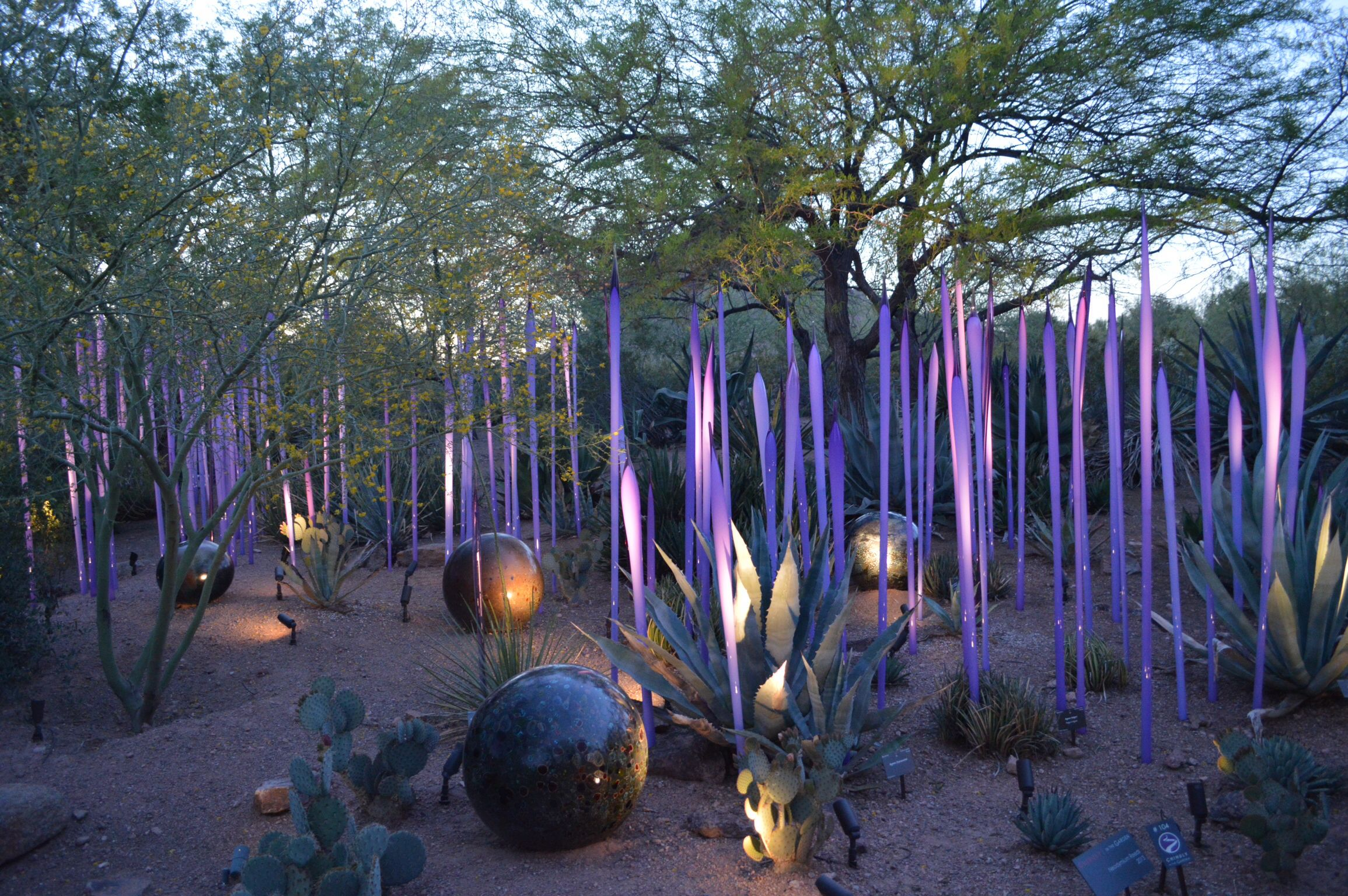 Chihuly Desert Botanical Gardens Installation art