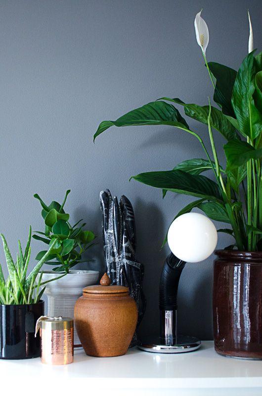 Grønne planter på malerisk bakgrunn. Stilleben av planter som tåler en nordisk vinter.