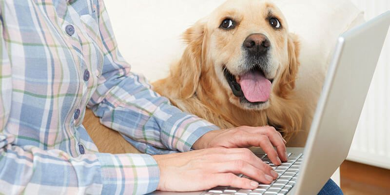 Pin by nse26 on working from home in 2020 pets american
