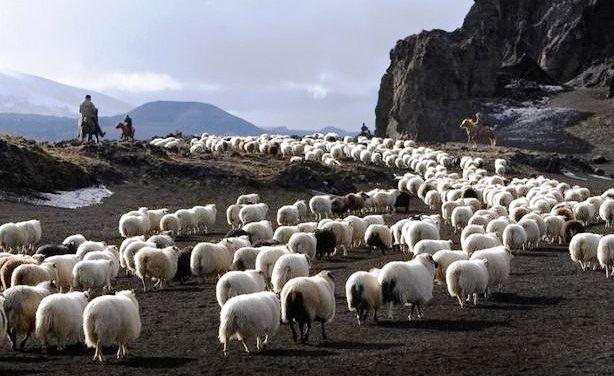Resultado de imagem para senhor é meu pastor