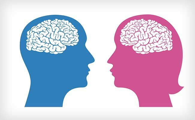Brains Aren't Actually 'Male' or 'Female,' New Study Suggests