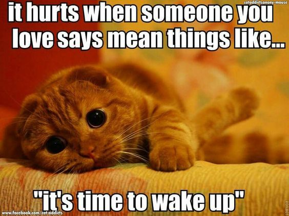 40 Good Morning Quotes For Her Funny Cat Memes Cats Funny Cats