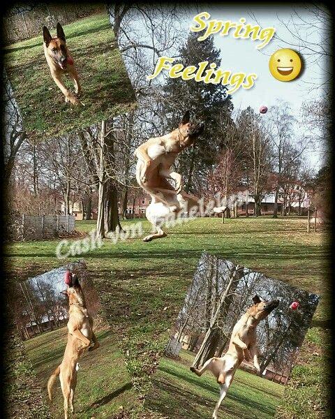 Spring Is Nature S Way Of Saying Let S Party Robin Williams Www Facebook Com Cash Von Badeleben Jump Spring Sachsen Anhalt Sachsen Niedersachsen