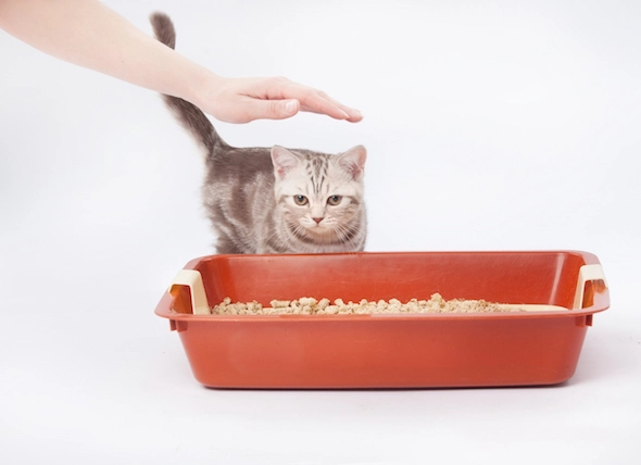 The Ultimate Guide to Eliminating Cat Pee Smell in 2020