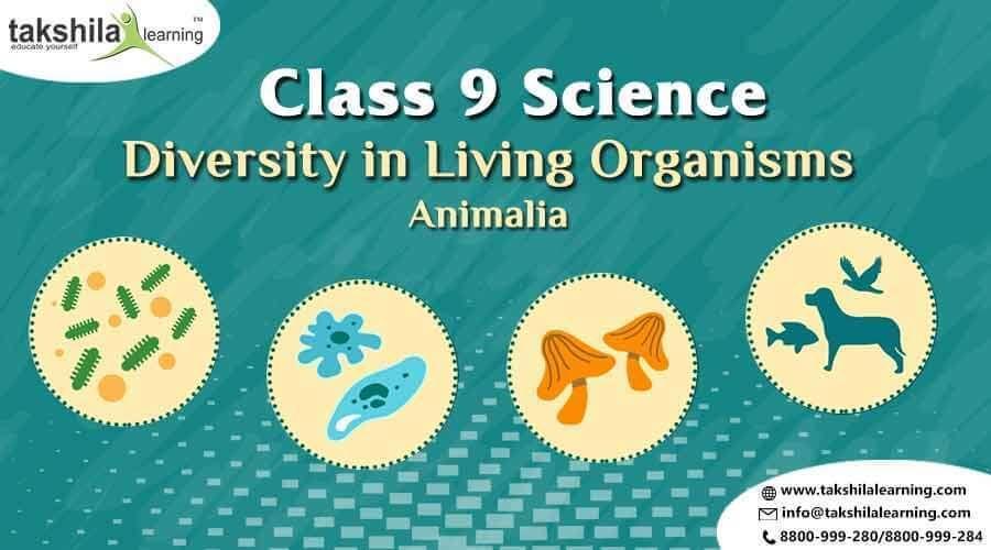 Image of: Phylum Porifera Animalia Class Science Diversity In Living Organisms animalia class9science Mensa For Kids What Is Animalia Class Science Diversity In Living Organisms