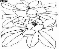 Resultado de imagen para croqui de flor de la cayena