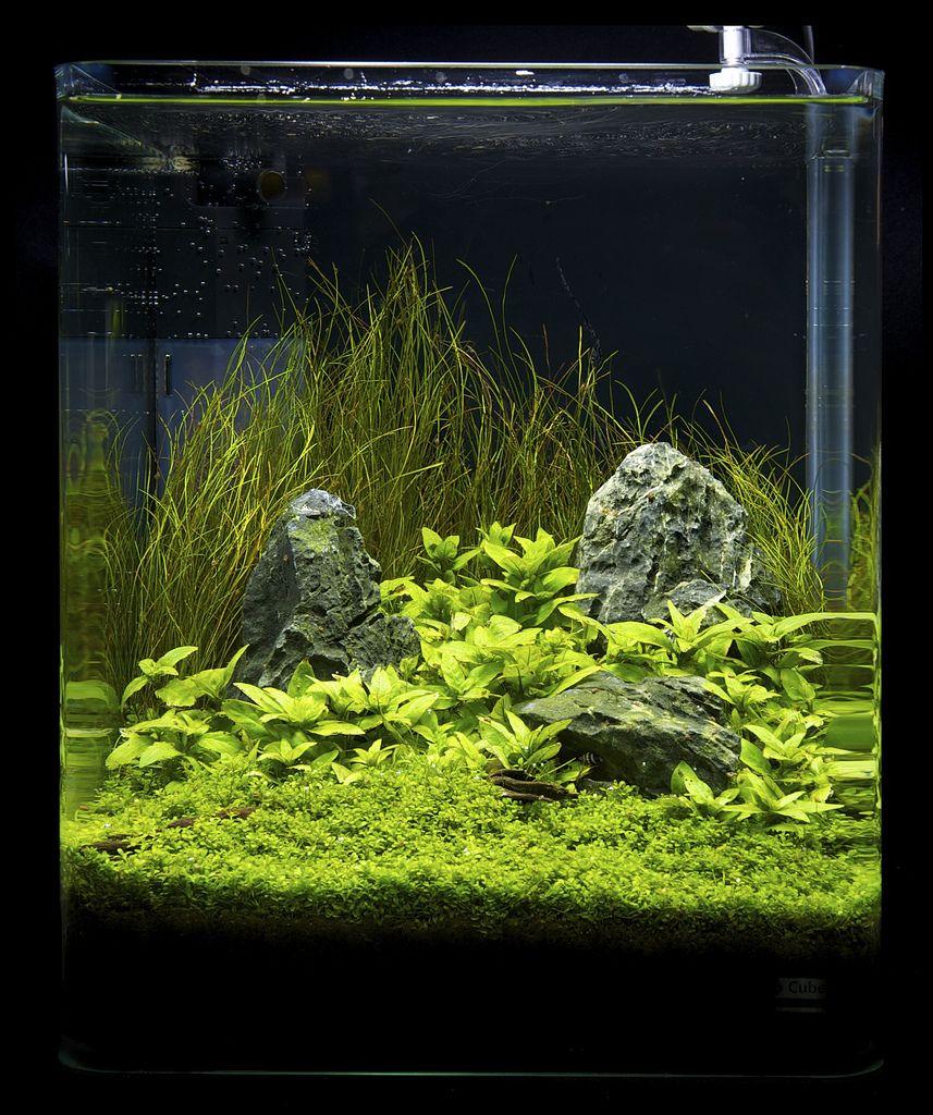 Aquarium Fish Tank, Nano Aquarium, Planted Aquarium