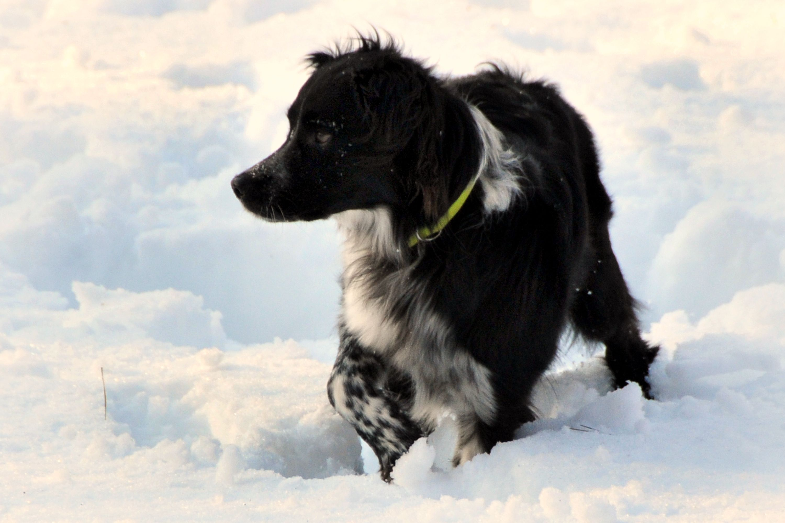 Great puppy training tips for border collies. Photos by