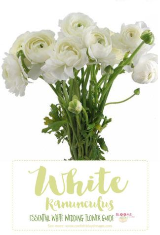 Essential white wedding flower guide names types pics wedding white flowers names white ranunculus tip ranunculus have hollow stems use floral wire to keep them propped up click here for 20 white wedding flowers mightylinksfo