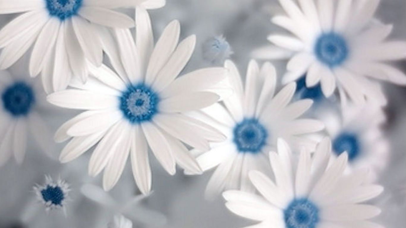 Blue And White Flower Wallpaper: Blue And White Flowers Wallpaper.