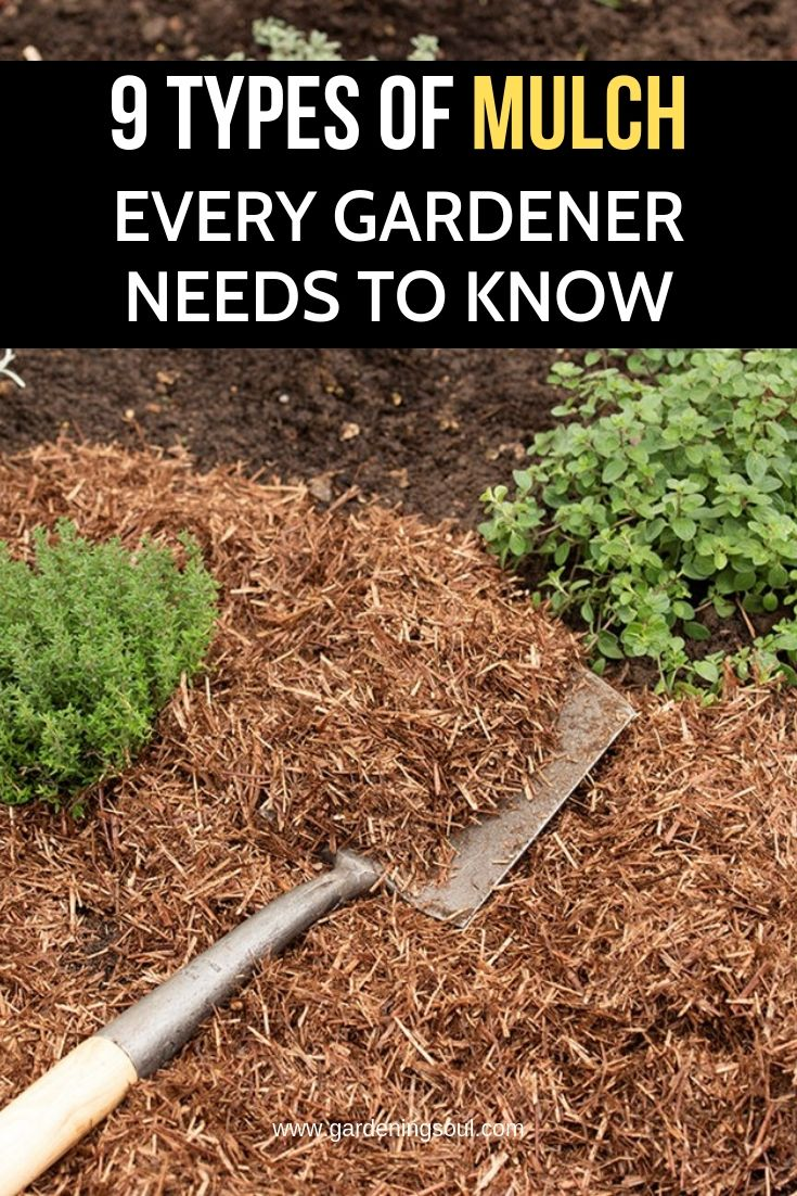 9 Types Of Mulch Every Gardener Needs To Know With Images Types Of Mulch Mulch For Vegetable Garden