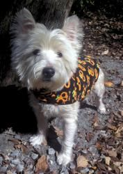 Adopt Wesley On Foster Dog Puppy Breath Westies
