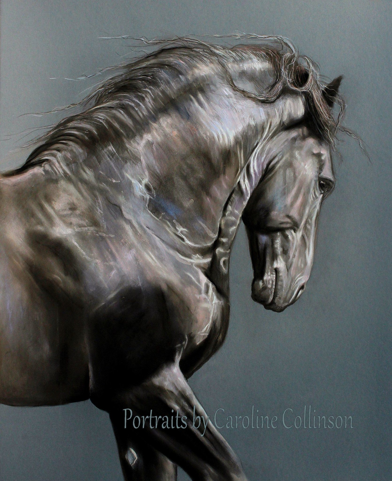 """""""The Colours of Tunis"""" (Friesian Stallion) Portraits by Caroline Collinson"""