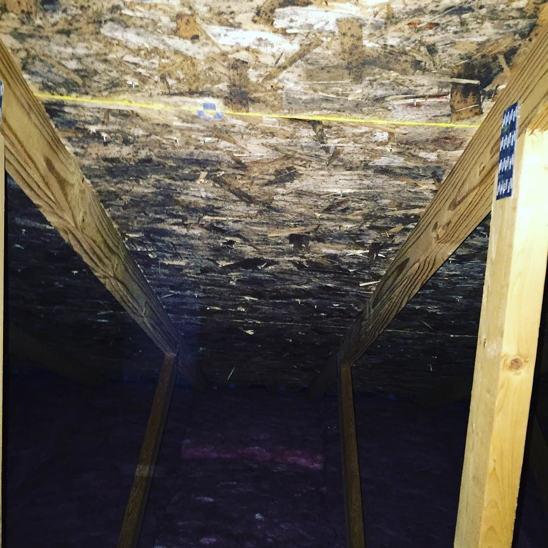 Mold Removal Remediation #roc #rochesterny #mold #moldremoval #moisture #moldremediation
