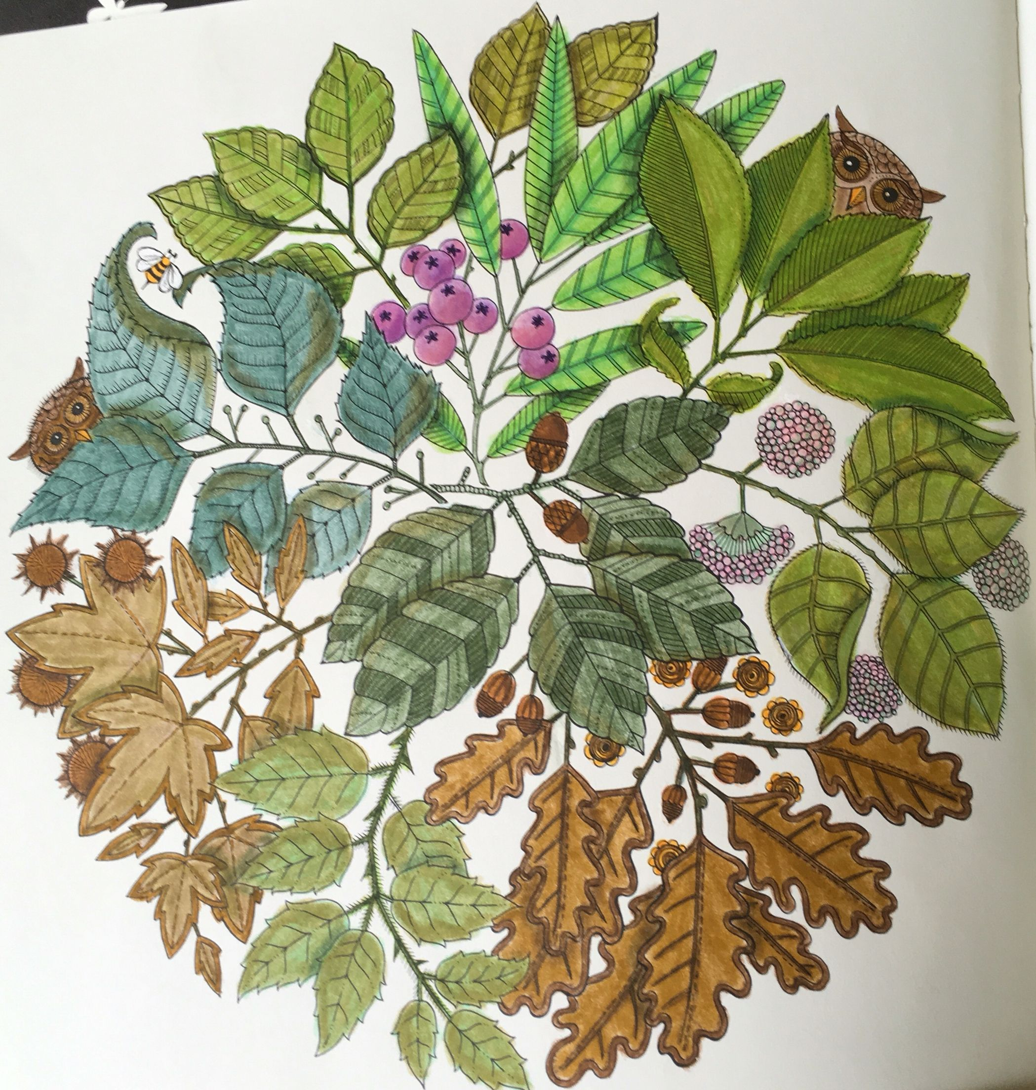 Secret Garden coloring book, Prismacolor colored pencils | My ...