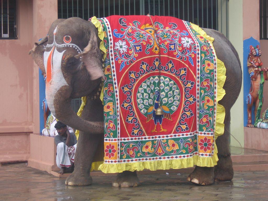 Indian Elephant Saree Dreams Indian Elephant Amimales