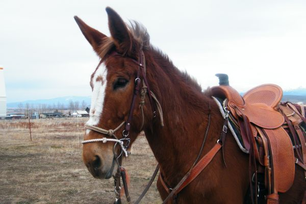 Pin By Terri Lane On Mules Mules Horses Equines