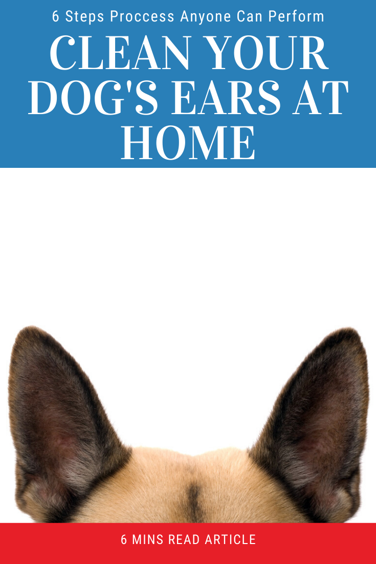 6 Steps For How To Clean A Dogs Ears At Home In 2020