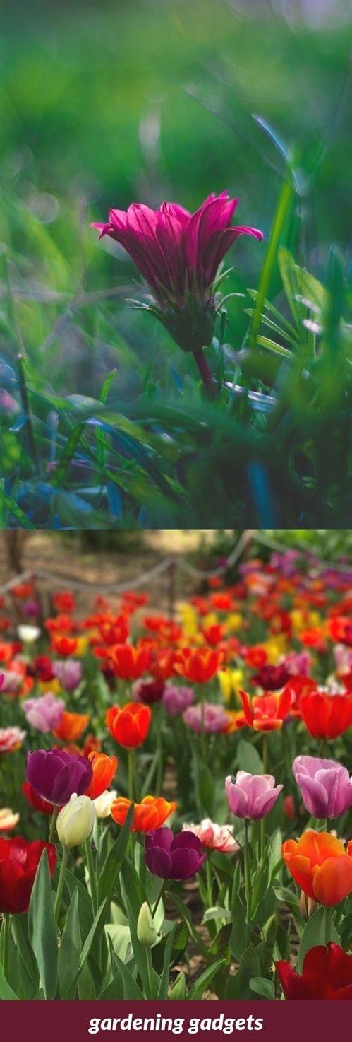 Gardening Gadgets 292 20180915175810 53 How To Improve Gardening