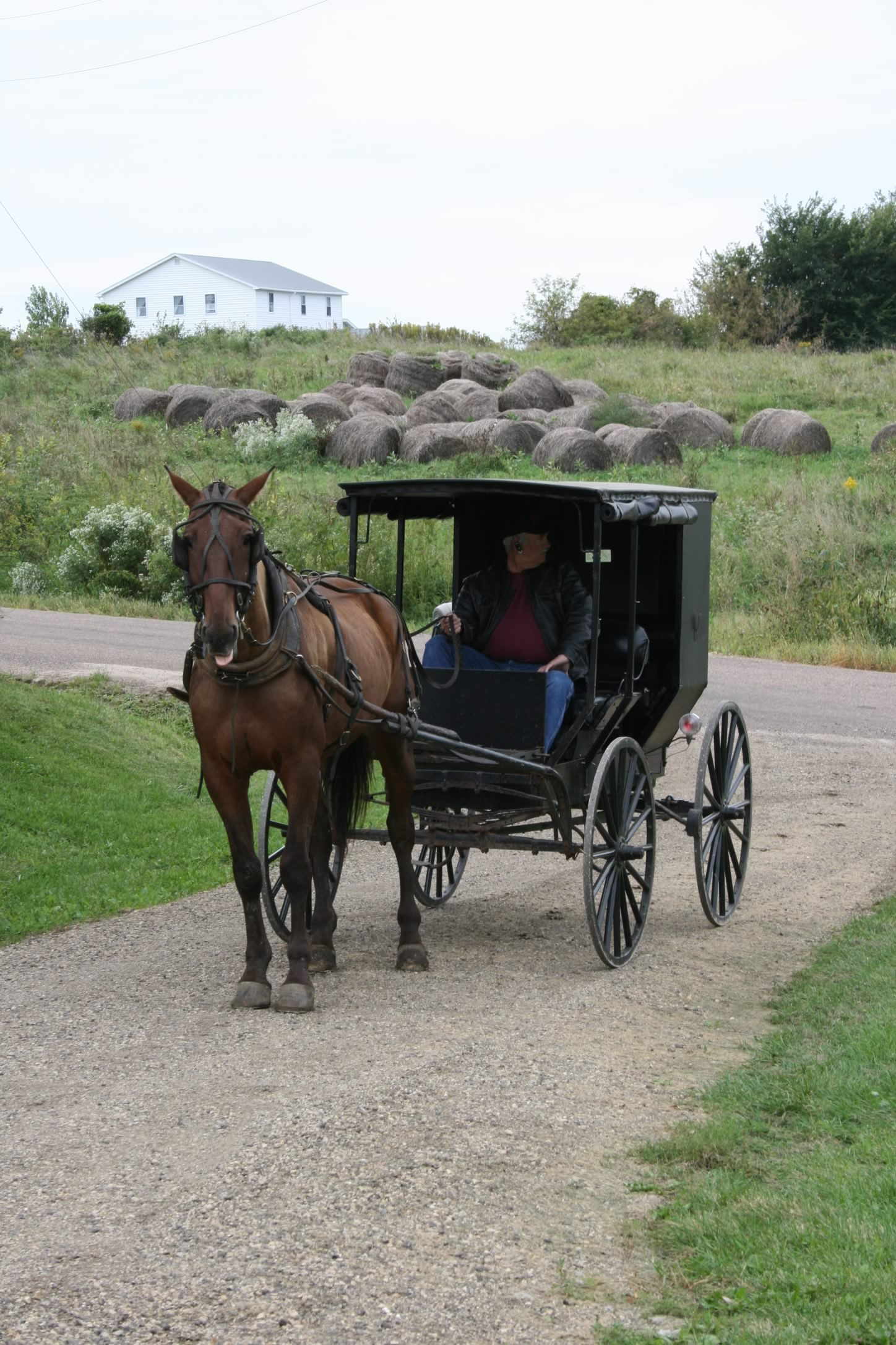 .Amish horse & buggy in 2019 Amish culture, Amish
