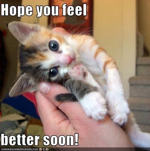 Feel Better Funny Cat