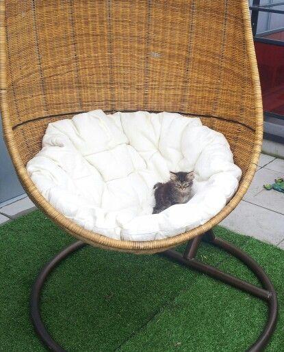 Avez-vous déjà vu un chaton sur un œuf suspendu ? #kitten #cat #funny
