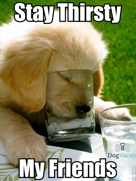 dc933653c82ad9eacd549c5832ef3045 stay thirsty meme copy dogvacay official blog critters