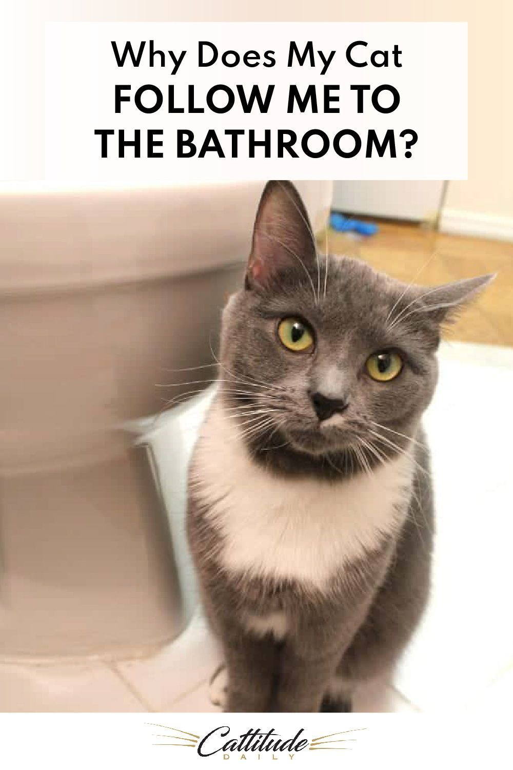 Why Does My Cat Follow Me To The Bathroom In 2020 Cats Cat Behavior Cat Facts