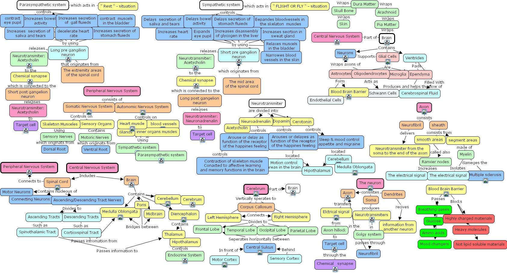 Neuroanatomy Structure Concept Map